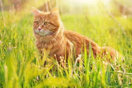 How to Get Rid of Cats In Your Garden